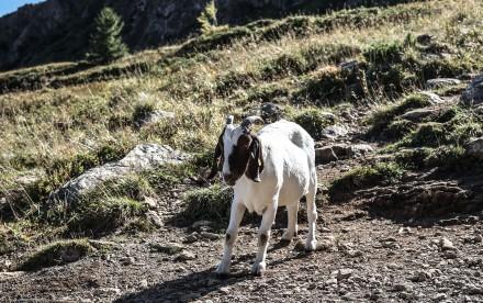 Wildseelodersee - Pillerseetal